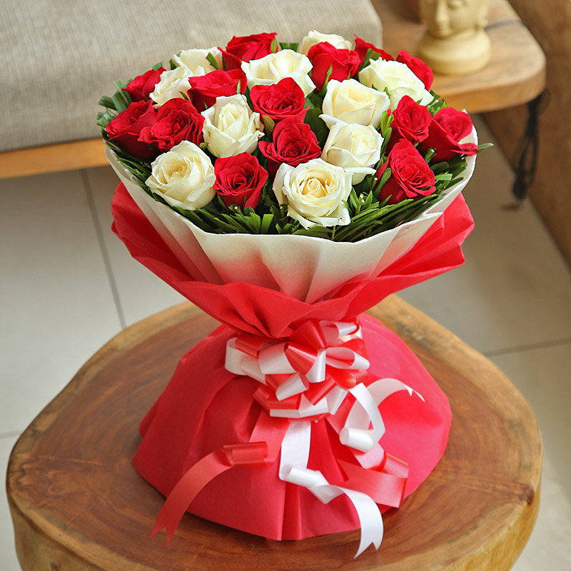 Red and White Magic Roses Flower