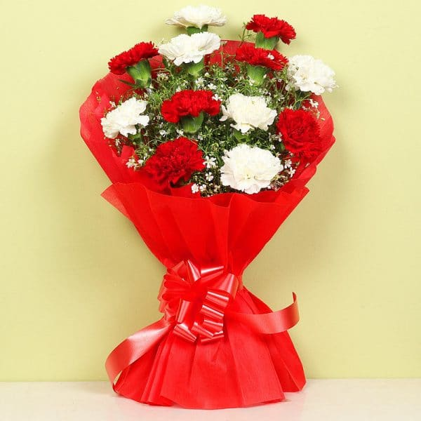 Red and White Carnation Flower